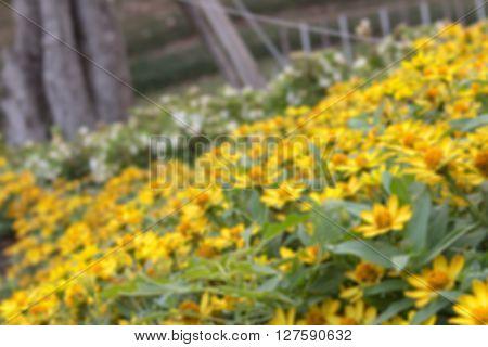 field of daisy flowers;plants dandelion bulr background
