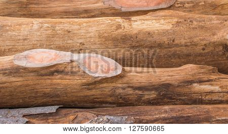 timber texture;Log's crosscuts on the timber cutting