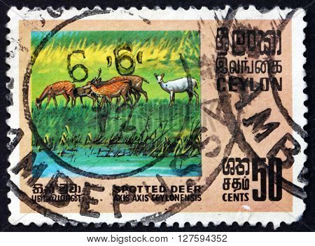 SRI LANKA - CIRCA 1970: a stamp printed in Sri Lanka shows Axis Deer Axis Axis is Deer Found in the Indian Subcontinent ans Sri Lanka circa 1970