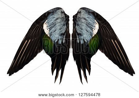 Clipped real duck wings on white background isolated front angel two pair