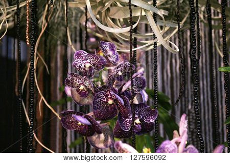 Close up of beautiful purple orchids on decoration background
