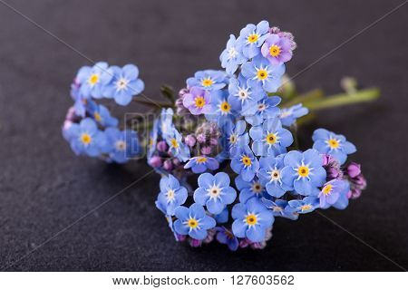 Detail Of Myosotis Forget-me-not Flower Placed On Slate Stone