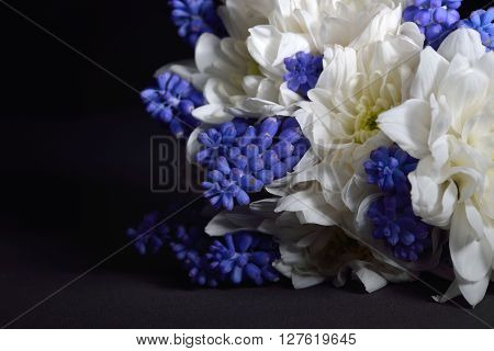 Bouquet Of White Chrysanthemum And Blue Grape Hyacinth On Black Background. Perfect Combination Of C