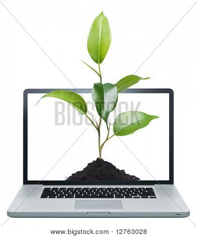 Laptop and green plant isolated on white background