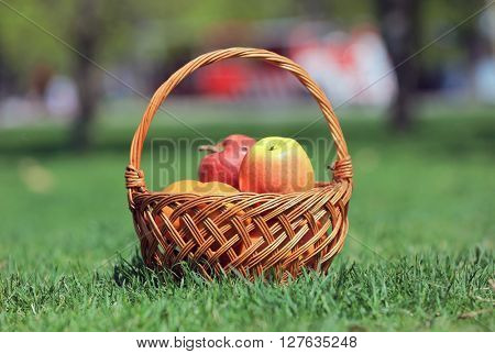 basket with apples on green meadow in park
