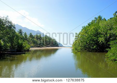 Mangroves on the shores of a tropical river . Philippines.