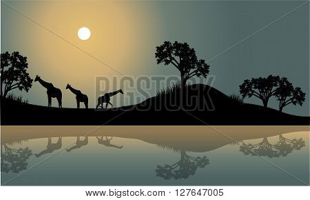 Giraffe in riverbank scenery at the night