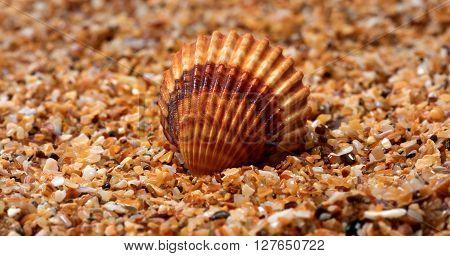 Seashell on sand in sun nice day