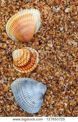 Three Seashell On Sand In Sun Day