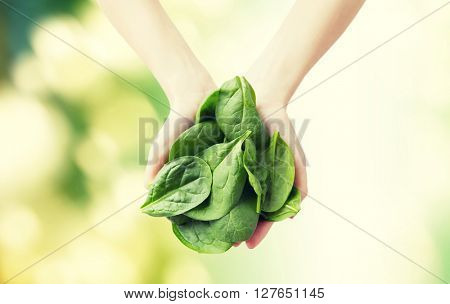 healthy eating, dieting, vegetarian food and people concept - close up of woman hands holding spinach over green natural background