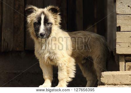 cute doggy standing near a barn at the farm