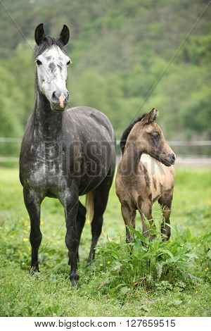 Beautiful Mare With Its Foal On Pasturage