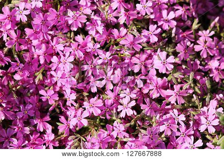 a very  very nice  beautiful purple flowers