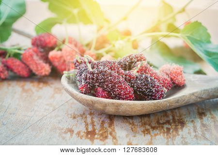 Mulberry fruit on wooden spoon. Selective focus