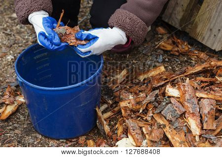 Gardener cuts pine bark for mulching plants