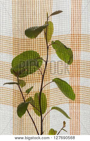 houseplant on a background of plaid curtains