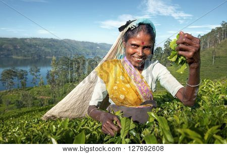 Indigenous Sri Lankan Tea Picker Character Concept