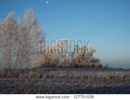 Russian Early Frosts