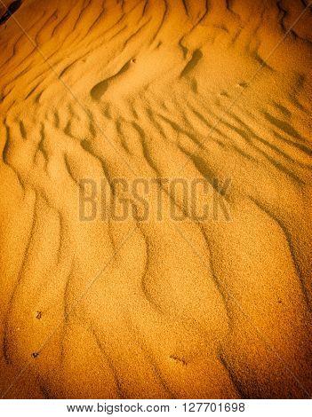 Sand dunes of desert Thar in Rajasthan