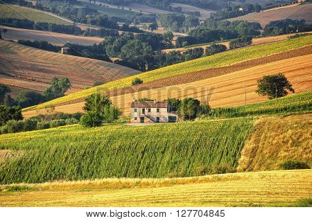 Country landscape in Marches (Italy) at summer: old farm