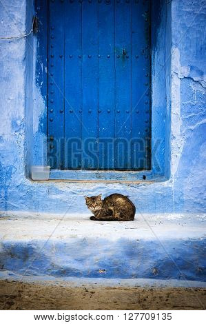 Cat in front of a door in Chefchaouen Morocco.