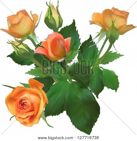 illustration with orange roses isolated on white background