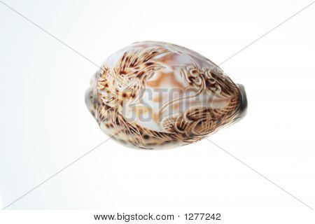 Art Carve  Shell  8536