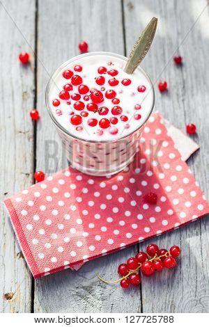 Buttermilk Fruit Red Currant Table Garden