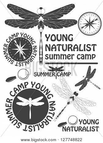 Set Of Vintage Dragonfly Labels, Badges And Design Elements. Vector