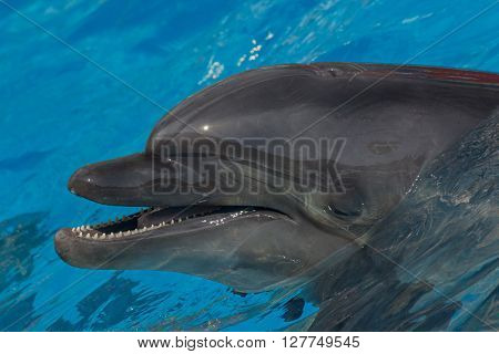 close up of dolphin in blue water