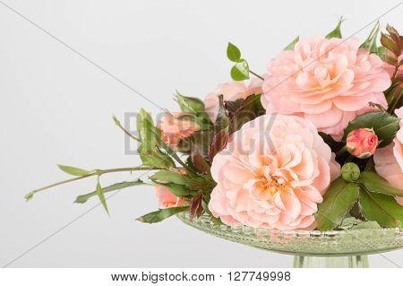 Arrangement of pink garden roses close up.