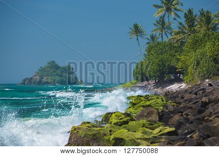 Tropical stone beach with palm trees and waves