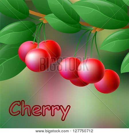 Red, Juicy, Sweet Cherries On A Branch For Your Design. Vector