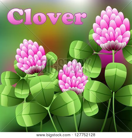 Blooming Pink Flowers On Green Field, Clover Meadow. Vector