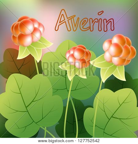 Cloudberry, Rubus Chamaemorus Or Bakeapple, Knoutberry, Salmonberry, Averin. Vector