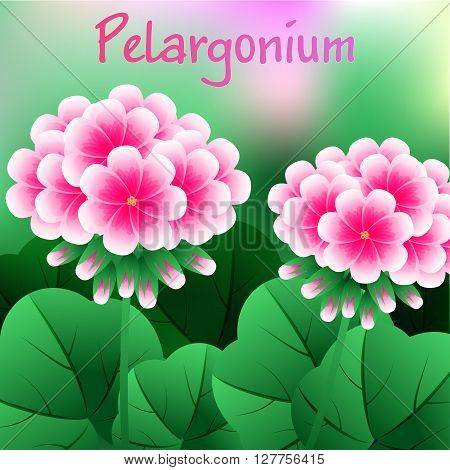 Beautiful Flower, Illustration Bunch Of Beautifull Red Geranium Flowers Or Pelargonium Graveolens. V