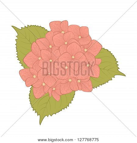 beautiful flower hydrangea isolated on white background. Hand-drawn contour lines and strokes.
