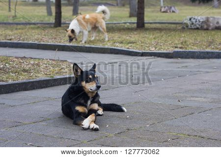 Stray dogs on street makes people afraid at park