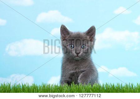 Gray Kittens Blue Gray Eyes In Green Grass Sky Background
