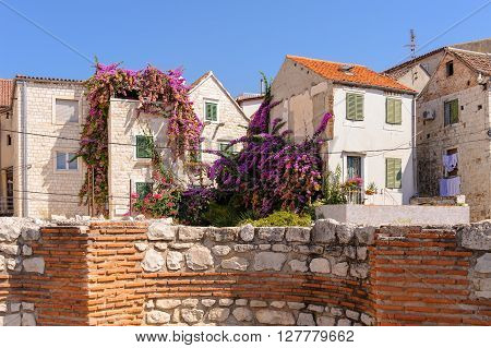 SPLIT CROATIA - SEPTEMBER 2 2009: View of a lush garden with an enormous bougainvillea growing up the side of a house inside the city walls