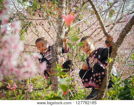 CHIANG MAI THAILAND - JANUARY 26 2015: Hill tribes child on the tree. Hmong new year festival day.