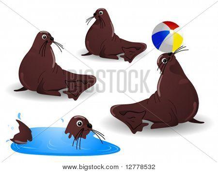 Sea Lions - Vector