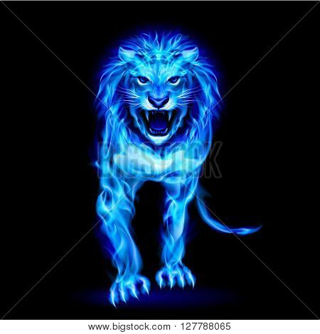 Blue fire lion isolated on black background