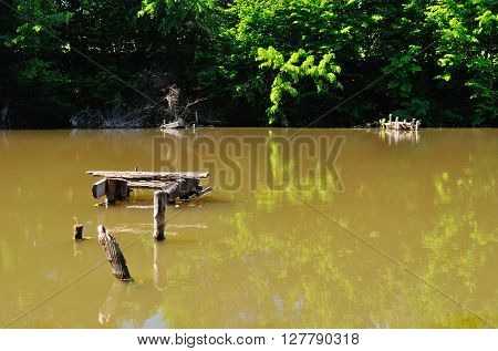 wonderful summer pond with muddy water and green trees
