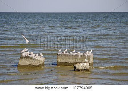 Seagulls Sitting On The Concrete Blocks In Taganrog Bay Of Sea Of Azov, Russia