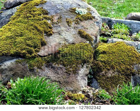 Large Garden Boulder with Patches of Green Moss