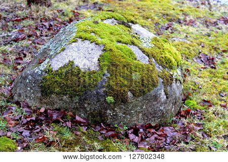 Rock or boulder with green moss patches on moss covered ground