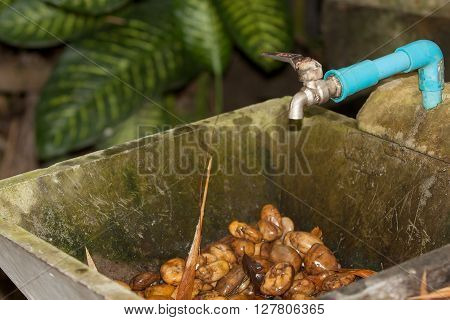 faucet water valve and washbasin in garden