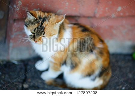 Cute Mixed Breed Cat Sitting Near The Red Wall