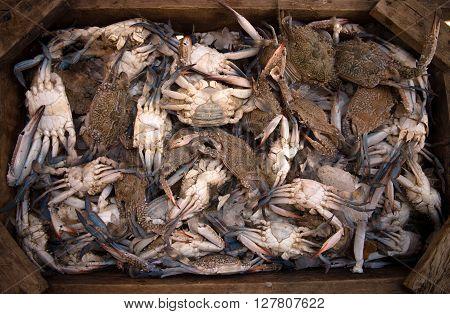 crabs in a box, Fresh sea crabs